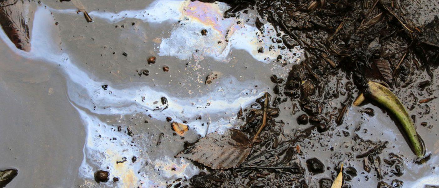Web_categorie-tour-d'horizon_biophytoremediation_Greenation-traitement-des-hydrocarbures-eaux-de-surfaces